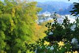 寿福寺 墓域の山茶花