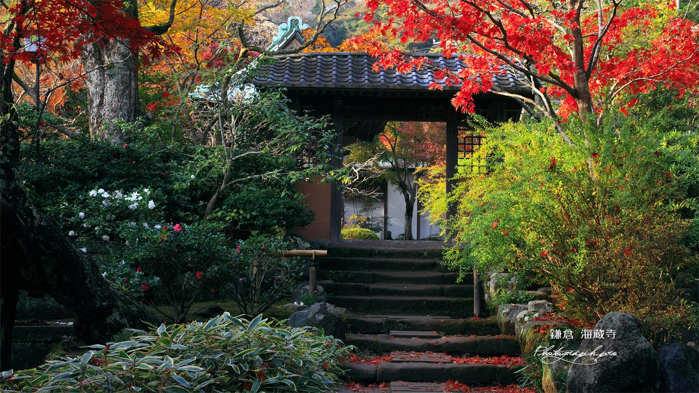 海蔵寺 紅葉と小門 壁紙