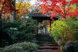 海蔵寺 紅葉と小門