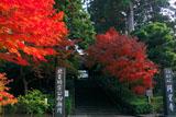 紅葉の円覚寺総門