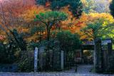 明月院総門と紅葉
