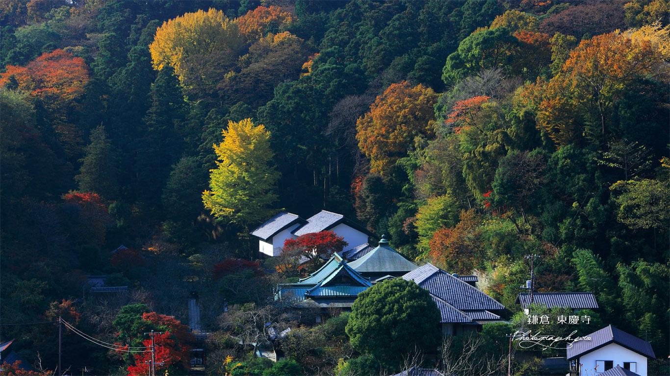 円覚寺から紅葉の東慶寺 壁紙