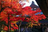 紅葉の円覚寺仏殿