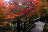 鎌倉長谷寺参道の紅葉