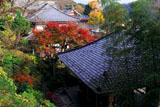 鎌倉長谷寺散策路から紅葉の境内