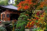 鎌倉長谷寺のウメモドキと経蔵