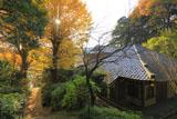 鎌倉今泉寺と銀杏の黄葉