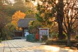 鎌倉龍宝寺 夕陽に耀く参道とイチョウの黄葉