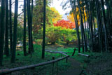 貞宗寺の紅葉