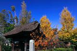鎌倉成福寺 山門と紅葉の境内