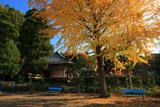 銀杏の黄葉と多聞院