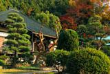 鎌倉大長寺 本堂と紅葉