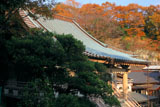 鎌倉西念寺 本堂と雑木紅葉