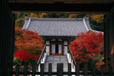 鎌倉大慶寺 山門越しの紅葉と本堂