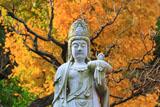 東光寺 聖観音菩薩と銀杏黄葉