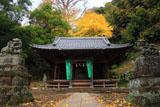 鎌倉御霊神社(梶原) 拝殿とイチョウ黄葉