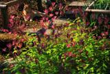 浄智寺のホトトギスと猫