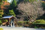 称名寺 冬桜