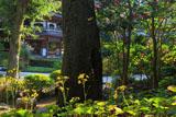 浄智寺のツワブキとサザンカ