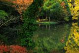 平家池の黄葉