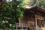 鎌倉甘縄神明神社 山茶花と拝殿