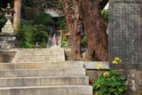甘縄神明神社 つわぶきと石段