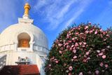 龍口寺 サザンカと仏舎利塔