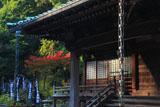 鎌倉青蓮寺 本堂と紅葉
