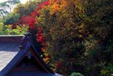 法源寺本堂と紅葉