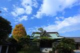 鎌倉浄泉寺 本堂と銀杏黄葉