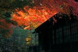 英勝寺の紅葉