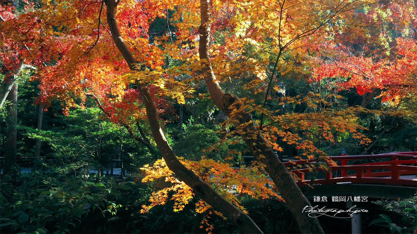 http://photograph.pro/bin/img/photo/09123573_HD.jpg