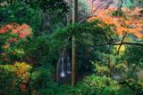 称名寺 陰陽の滝