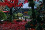 海蔵寺 紅葉と仏殿