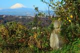 衣張山のお地蔵様と小菊
