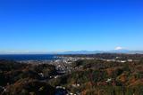鎌倉 衣張山からの雑木紅葉と富士山