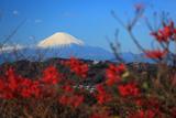 鎌倉浄明寺 紅葉越しの富士山