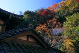 逗子法性寺の柿と紅葉
