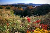 久木の雑木紅葉