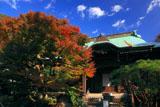 鎌倉妙法寺 楓と本堂
