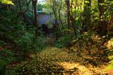 鎌倉妙法寺 苔石段と仁王門