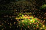 妙法寺 苔石段の落葉