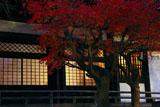 本覚寺 宵の紅葉と本堂