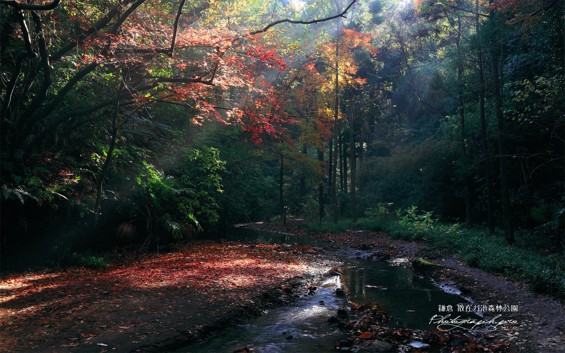 散在ガ池森林公園 砂押川源流の紅葉