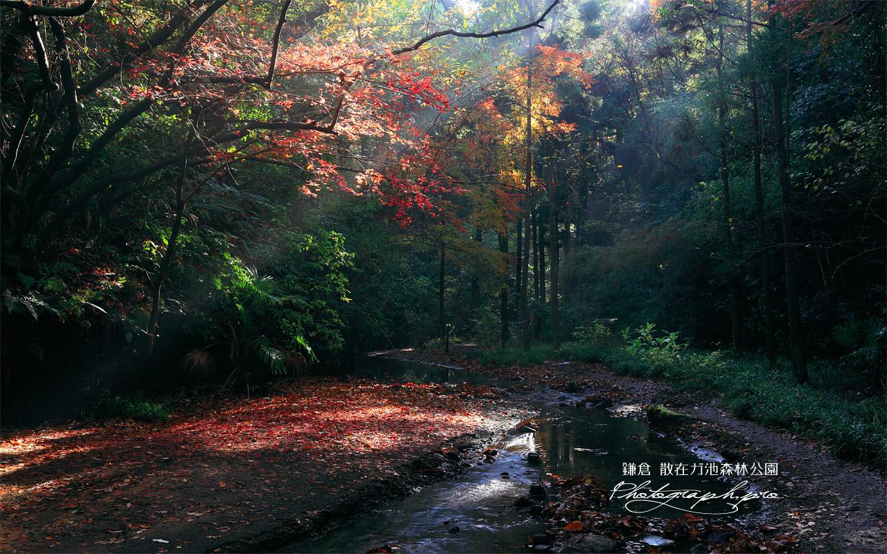 散在ガ池森林公園 砂押川源流の紅葉 壁紙