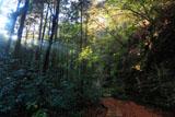 散在ガ池森林公園 せせらぎの小径の雑木黄葉