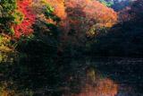 散在ガ池森林公園 鎌倉湖の紅葉