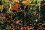 散在ガ池森林公園 散在ガ池の鴨