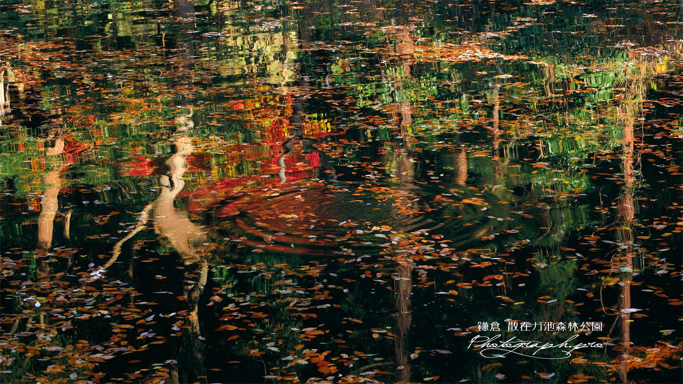 散在ガ池森林公園 自然のパレット 壁紙