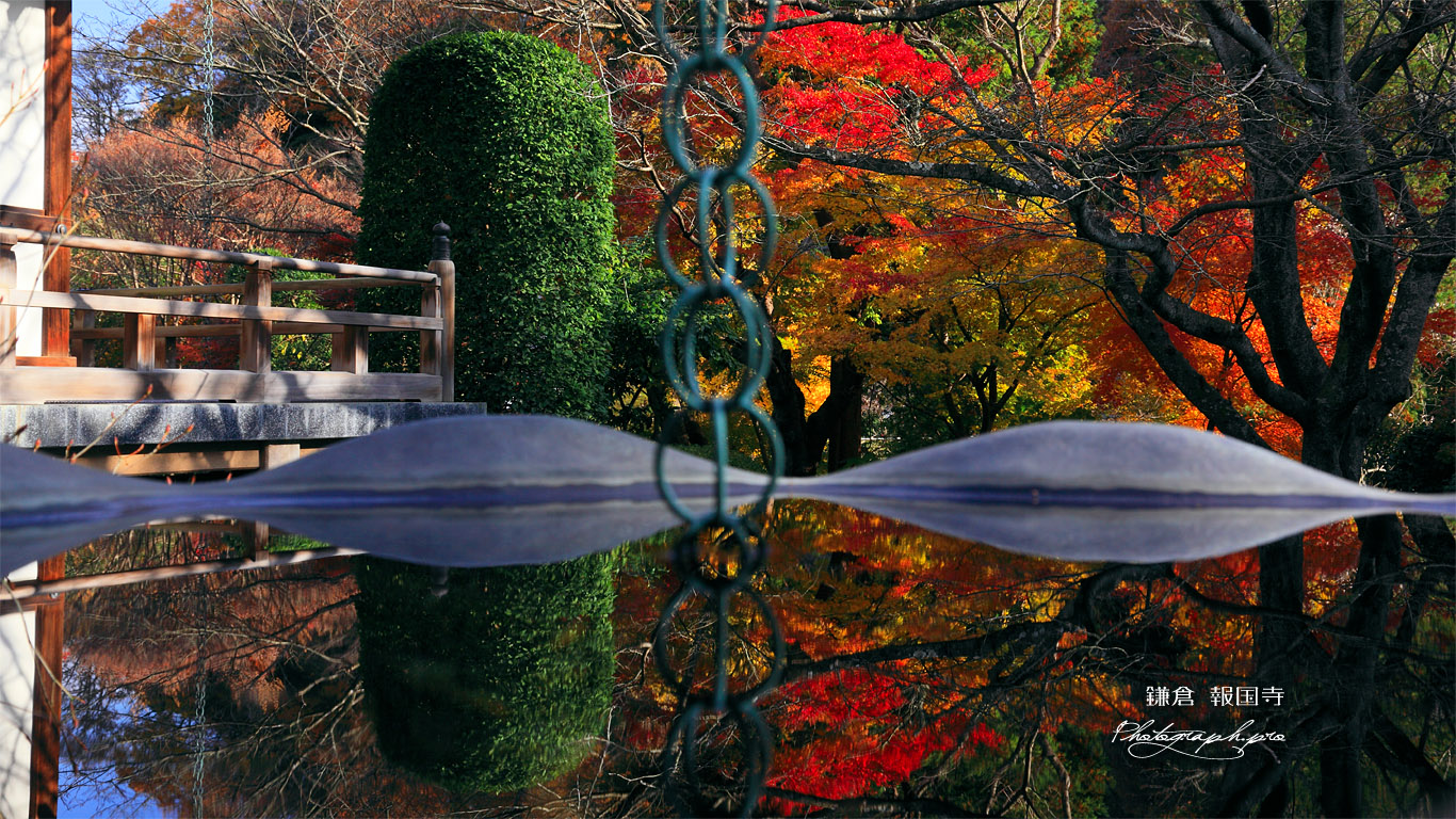 鎌倉報国寺 天水桶に映る紅葉 壁紙